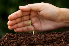 Plant growth-New beginnings. Hand protecting a young plant-New beginnings Royalty Free Stock Image