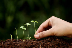 Plant growth-New beginnings. New life Royalty Free Stock Photos