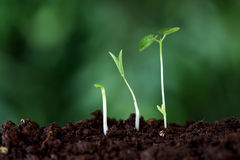 Plant growth-New beginnings. New life Stock Photos