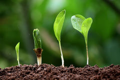 Plant growth-New life Stock Photography