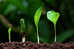 Plant growth-New life. Plant growth-New beginnings against green Royalty Free Stock Photo