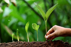 Plant growth-New life. Plant growth-New beginnings against green Stock Photo