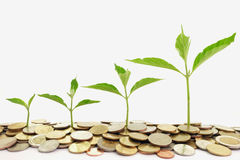 Plant growth on the pile of coin Royalty Free Stock Photography