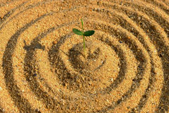 Plant growth on the sand Royalty Free Stock Image