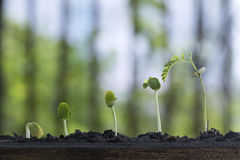Plant growth from seed tree. stock images