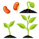 Plant growth stages from seed to sprout. Vector illustration Royalty Free Stock Photos