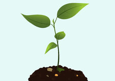 Plant Growth Royalty Free Stock Image