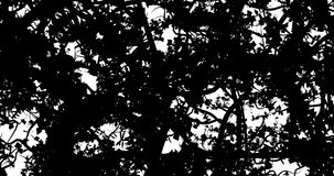 Plant growth to black. 3D animation of white screen filling with black from growing tangled vines, can be used for cuts and transitions stock footage