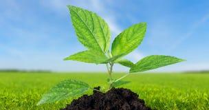 Plant Growth Stock Photo
