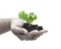 A plant in a hand Royalty Free Stock Images