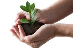 Plant in a hand Royalty Free Stock Photos