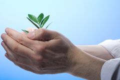 Plant in a hand Stock Photo