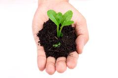 Plant in hand Royalty Free Stock Photos