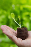 Plant In Hand. On green nature background Royalty Free Stock Photo