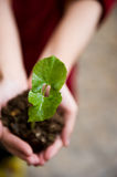 Plant in the hand Royalty Free Stock Images
