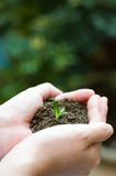 Plant in the hand Stock Image