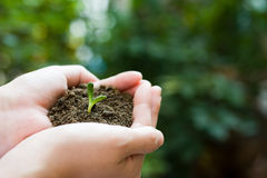 Plant in the hand Stock Photography