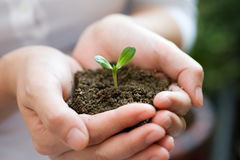 Plant in the hand Royalty Free Stock Photos