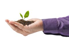 Plant in hand Stock Images