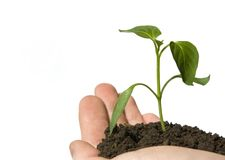 Plant in a hand Stock Photos