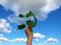 Plant in the hand. Green plant in the hand on cloudy background Royalty Free Stock Photo