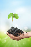 Plant in the hand on blur background Royalty Free Stock Images