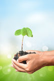 Plant in the hand on blur bokeh background Stock Images