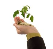 Plant in hand and coins. Looking up to a new plant sprouting from a hanful of golden coins (isolated Stock Images