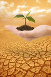 Plant in hand droughty earth Stock Photo