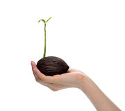 Plant in hand Stock Photo