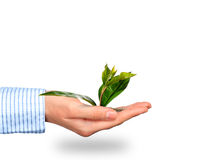Plant in hand. Stock Images