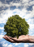 Plant on the hand Royalty Free Stock Photo