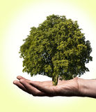 Plant on the hand Royalty Free Stock Images