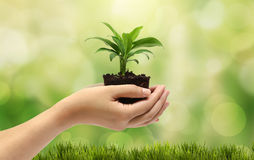 Plant in the hand Stock Photo