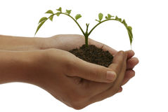 Plant on hand Stock Photos