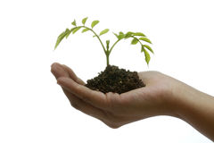 Plant on hand Royalty Free Stock Photo