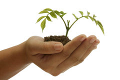Plant on hand Royalty Free Stock Photos