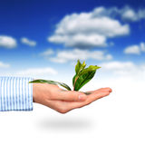 Plant in hand. Stock Image