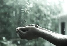 Plant on Hand during Rainy Day Royalty Free Stock Photo