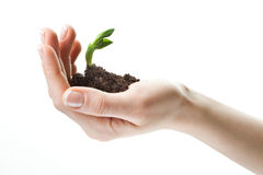 Plant in hand on white background Stock Images