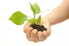 Plant in hand on white background Royalty Free Stock Photos