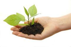 Plant in hand on white background Stock Photos