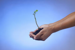 Plant in the hand. Stock Images