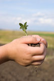 The plant in hands. The little plant in little hands Stock Photography