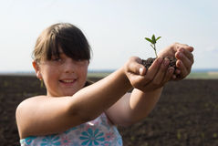 The plant in hands Stock Photography