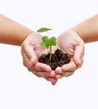 Plant in hands Stock Images