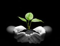 Plant in hands. Hands holding sapling in soil on black Stock Photos