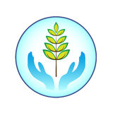 Plant and hands. On the blue ring Royalty Free Stock Image