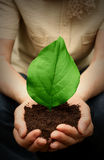 Plant in hands Royalty Free Stock Image