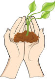 Plant in hands vector illustration